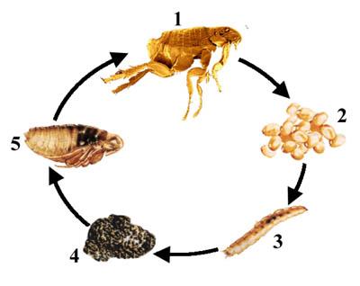 Verzorging parasieten - Een stuk grond ontwikkelen ...